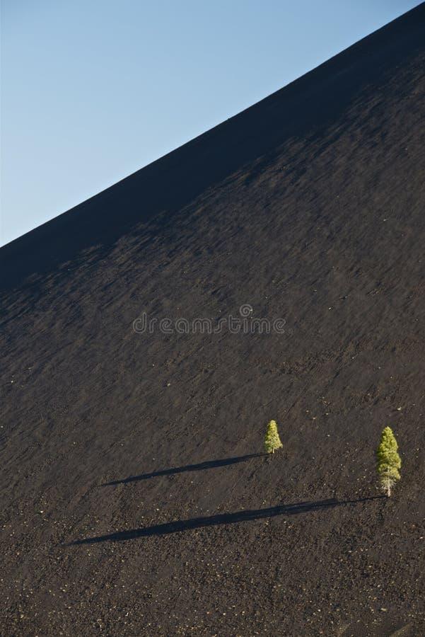 Árboles desafiantes foto de archivo