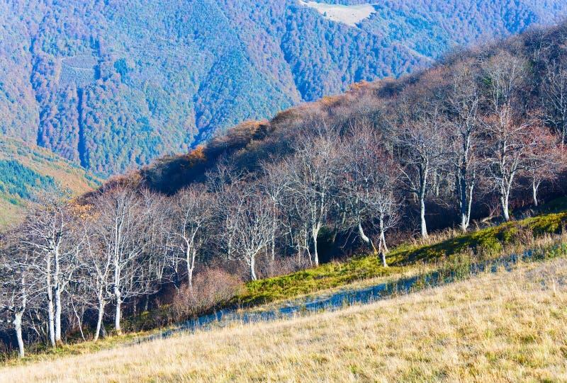 Árboles descubiertos rígidos del otoño fotografía de archivo