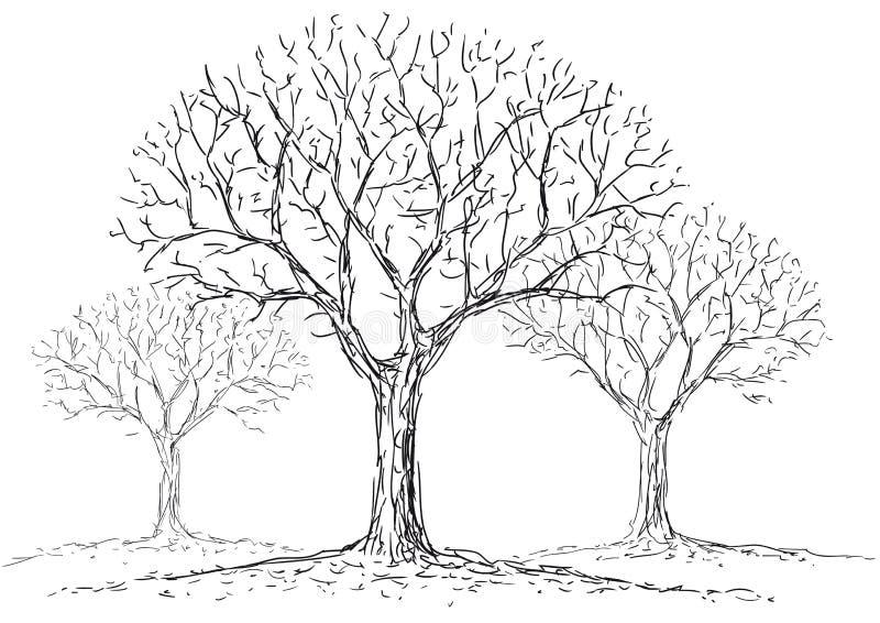 Árboles deshojados stock de ilustración