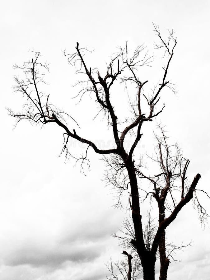 Árboles Deshojados Con Las Ramas Foto de archivo - Imagen de adentro ...