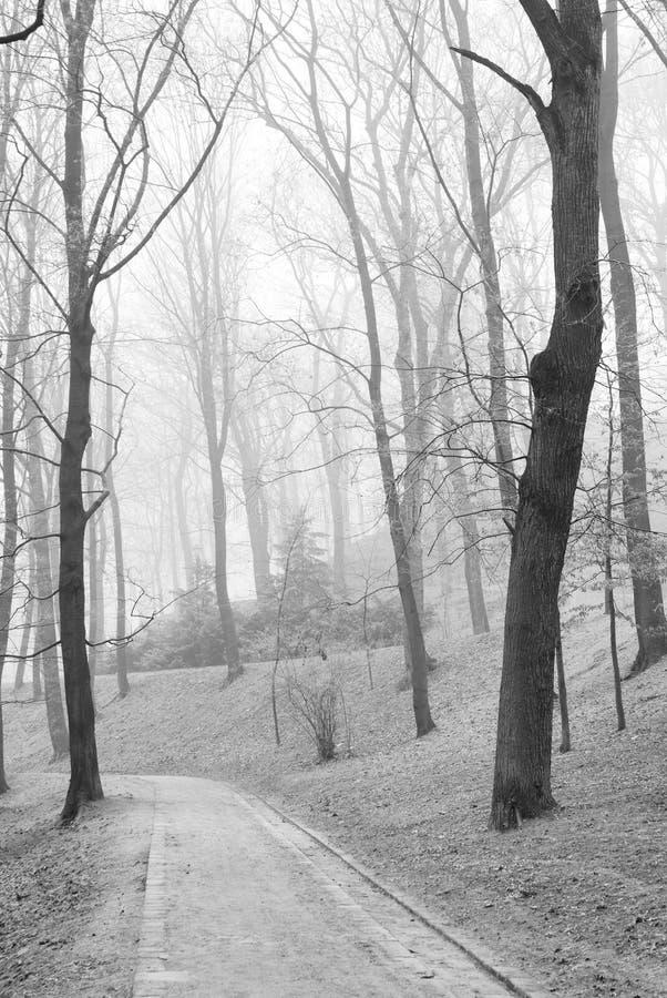 Árboles deshojados en parque de niebla de la ciudad del otoño foto de archivo