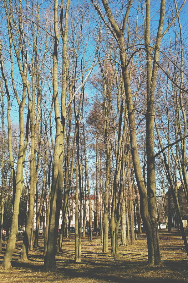 Árboles desnudos fotos de archivo