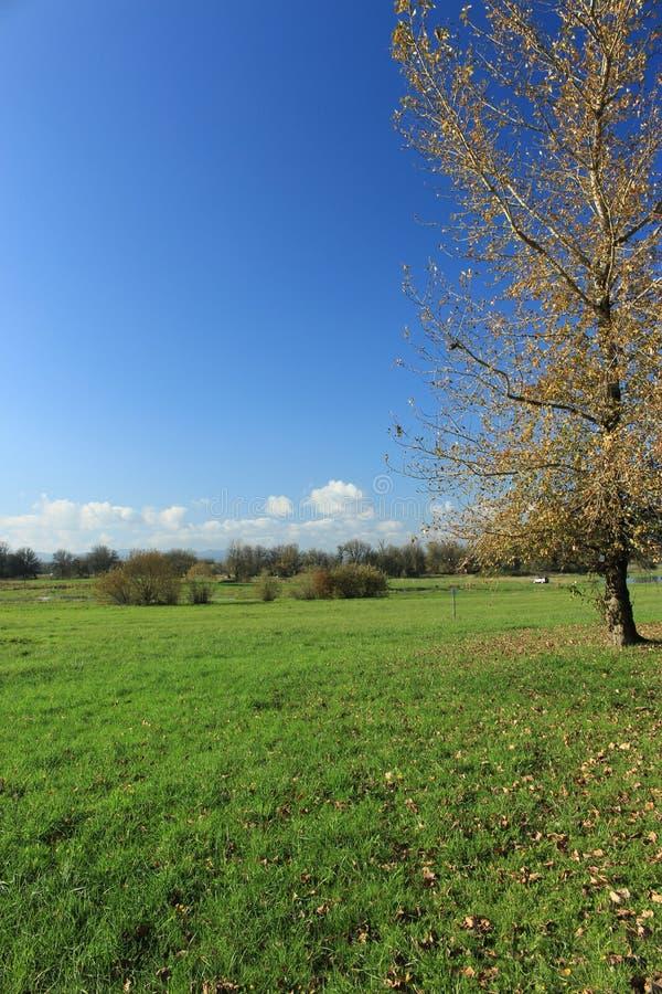 Árboles desnudos con el cielo azul como fondo imagenes de archivo