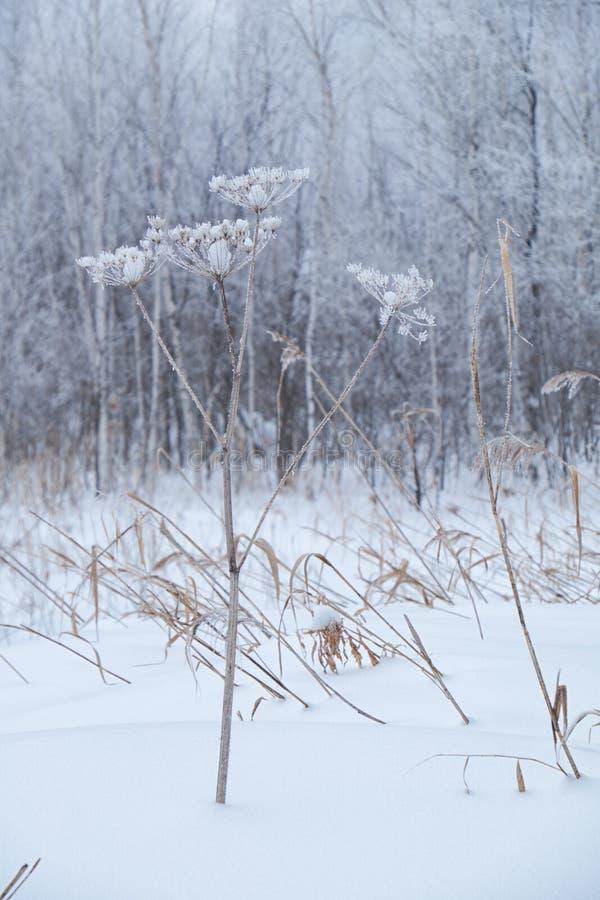 Árboles desnudos del invierno sin las hojas debajo de la nieve foto de archivo