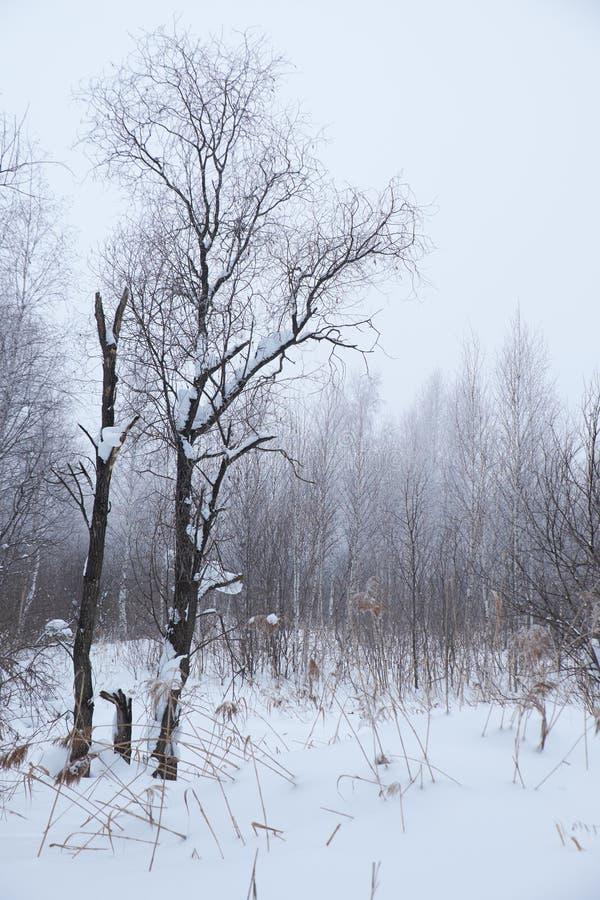 Árboles desnudos del invierno sin las hojas debajo de la nieve imágenes de archivo libres de regalías