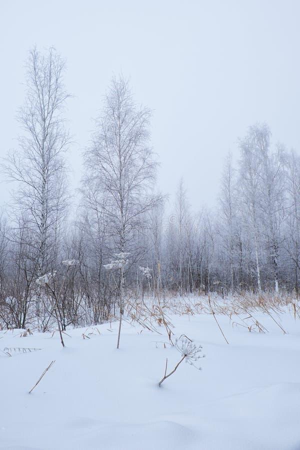 Árboles desnudos del invierno sin las hojas debajo de la nieve imagenes de archivo