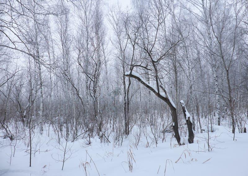 Árboles desnudos del invierno sin las hojas debajo de la nieve fotografía de archivo