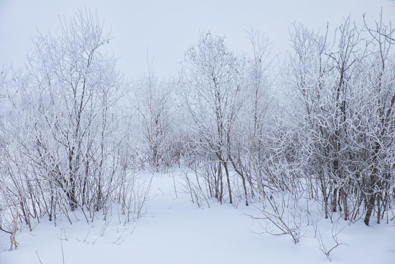 Árboles desnudos del invierno sin las hojas debajo de la nieve imagen de archivo