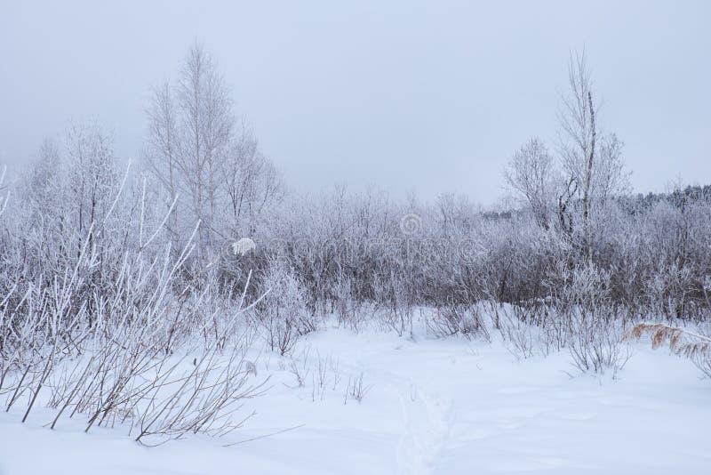 Árboles desnudos del invierno sin las hojas debajo de la nieve imagen de archivo libre de regalías
