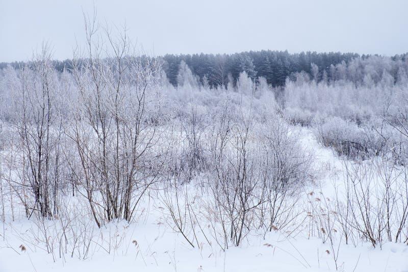 Árboles desnudos del invierno sin las hojas debajo de la nieve fotos de archivo libres de regalías