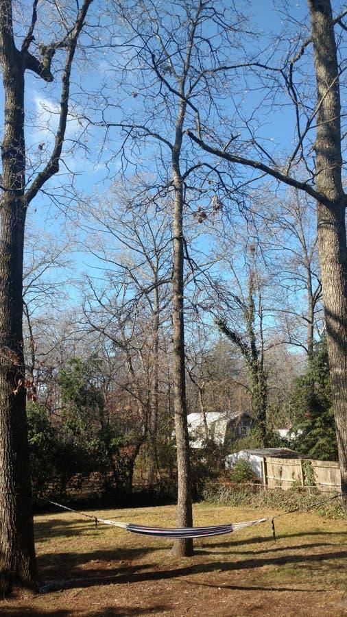 Árboles desnudos en el patio trasero imagen de archivo