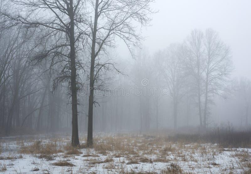 Árboles desnudos en una niebla matutina en invierno imagenes de archivo