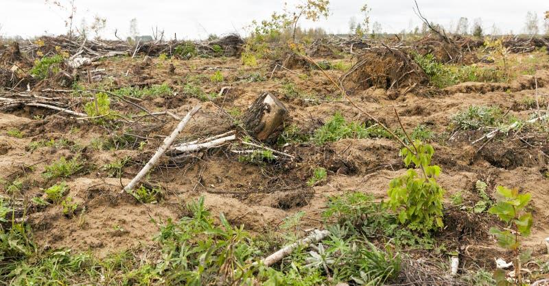 Árboles después del huracán foto de archivo