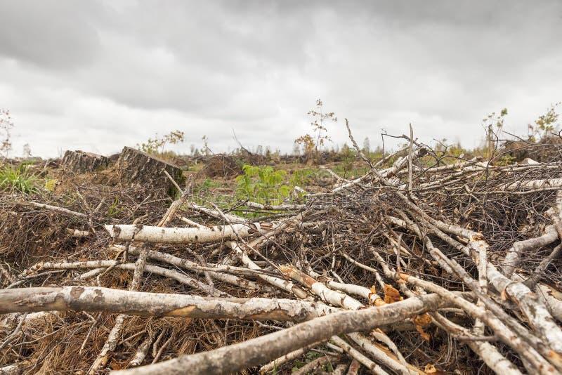 Árboles después del huracán foto de archivo libre de regalías