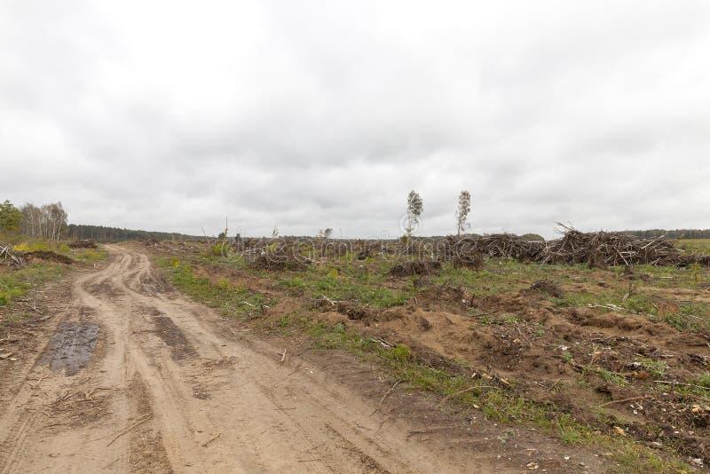 Árboles después del huracán fotografía de archivo libre de regalías