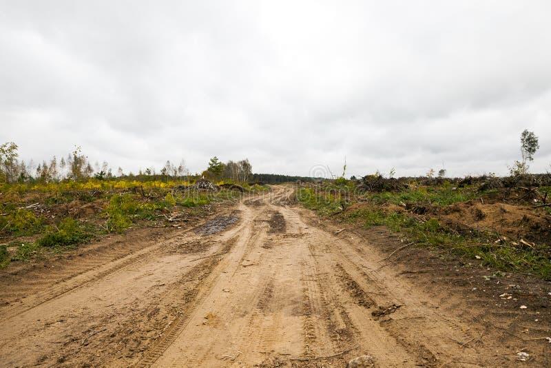 Árboles después del huracán fotos de archivo