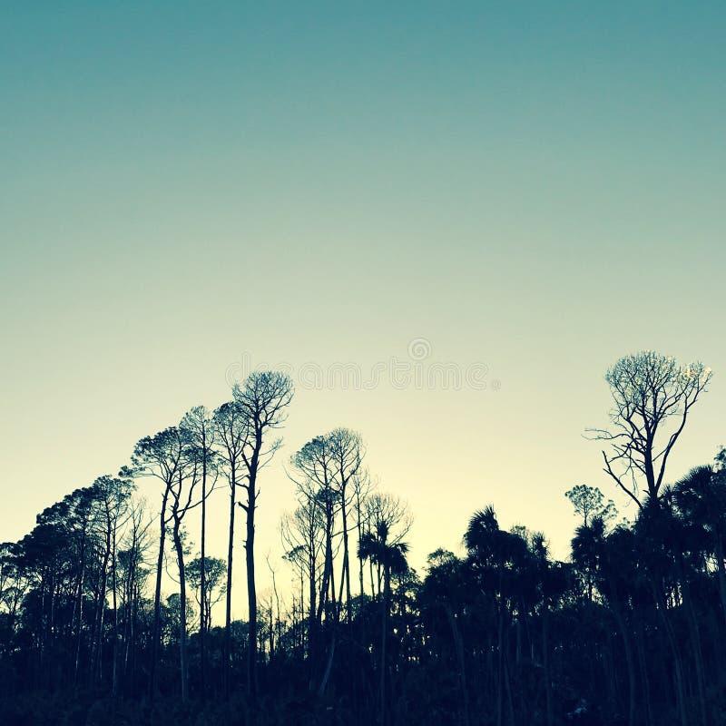 Árboles elevados en parque de Carolina del Sur - isla estado de la caza - los E.E.U.U. fotografía de archivo libre de regalías
