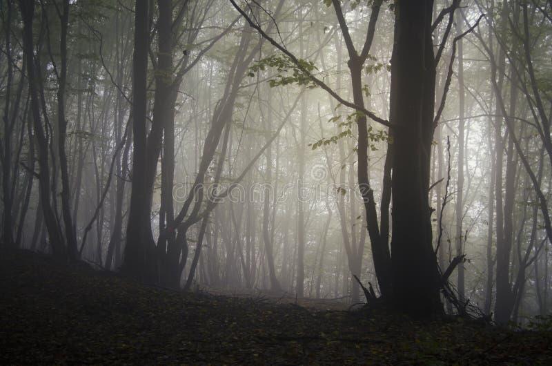 Árboles en bosque misterioso oscuro el la noche de Halloween fotos de archivo
