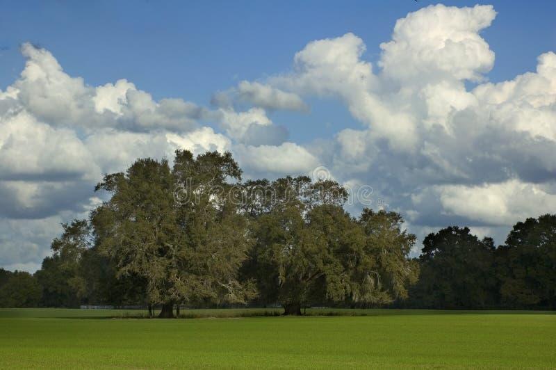 Árboles en campo de hierba imagen de archivo