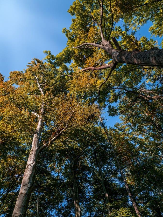 Árboles en colores de la caída fotografía de archivo libre de regalías