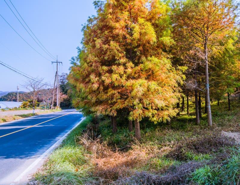 Árboles en colores de la caída al lado del camino en el campo imagen de archivo
