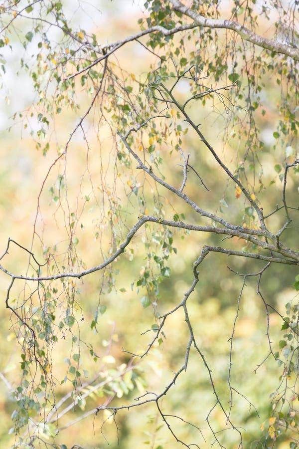 Árboles en detalle del otoño foto de archivo libre de regalías