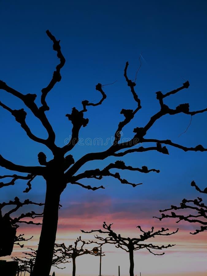 Árboles en dusseldof en la oscuridad fotos de archivo