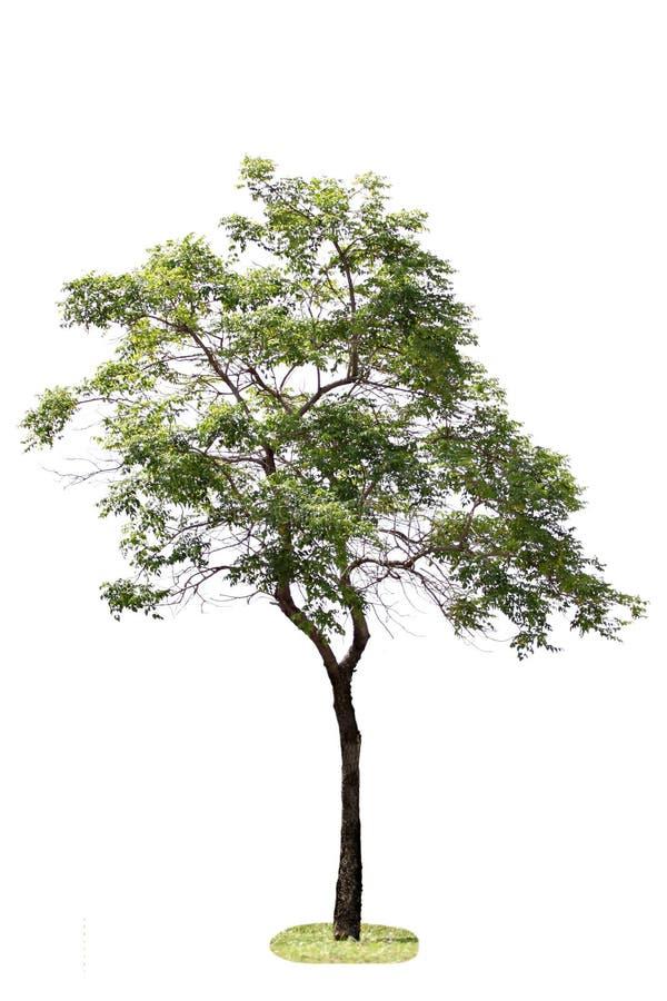 Árboles en el bosque. imágenes de archivo libres de regalías