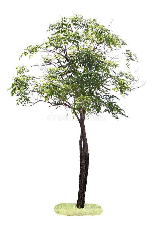Árboles en el bosque. imagen de archivo libre de regalías