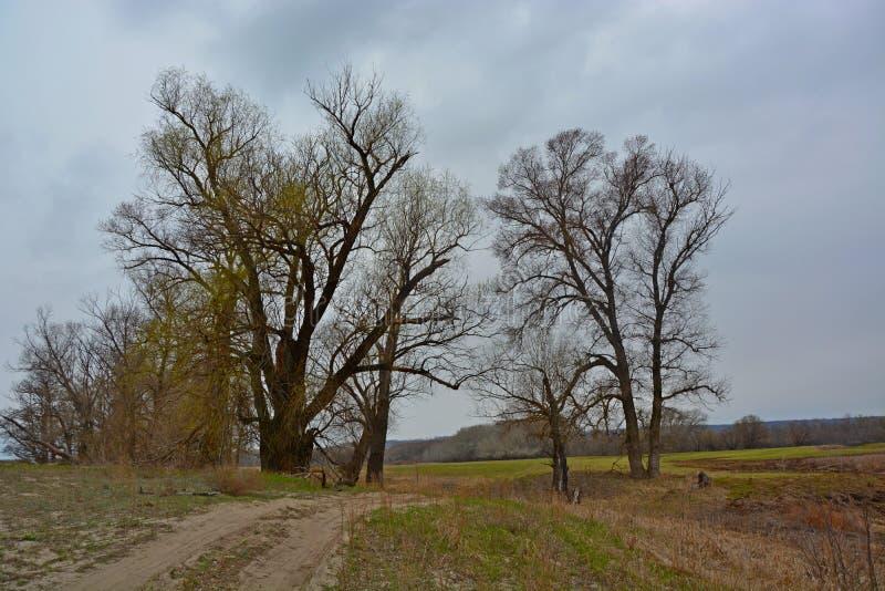 Árboles en el camino fotos de archivo
