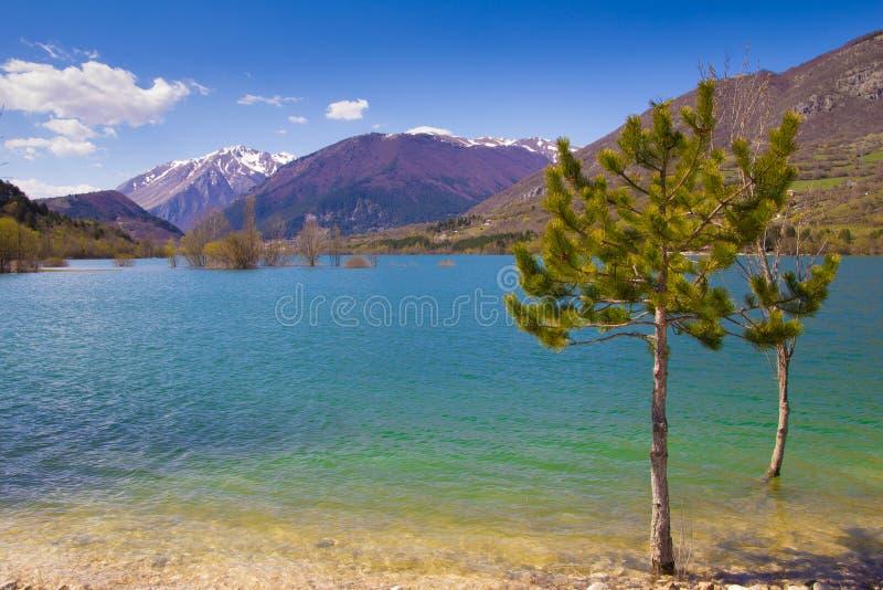Árboles en el lago Barrea imagen de archivo libre de regalías