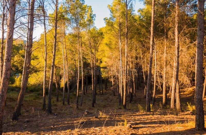 Árboles en el medio del bosque en un día soleado imágenes de archivo libres de regalías