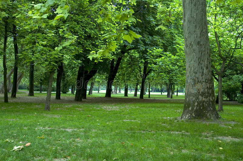 Árboles en el parque 1 fotografía de archivo libre de regalías