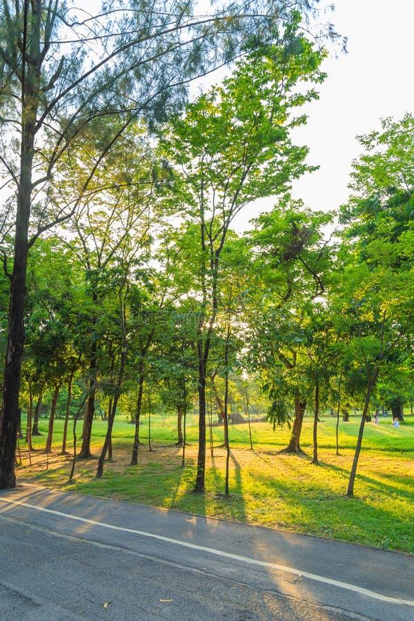 Árboles en el parque con una luz por la tarde foto de archivo libre de regalías