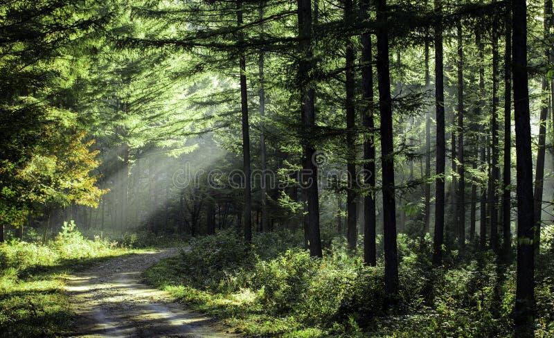 Árboles en el sol de la mañana fotos de archivo