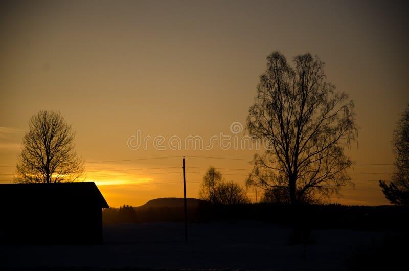 Árboles en el sunsett fotografía de archivo libre de regalías