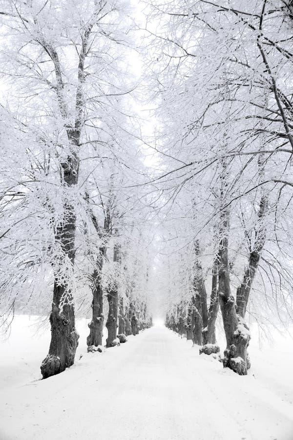 Árboles en helada de los hoars fotos de archivo libres de regalías