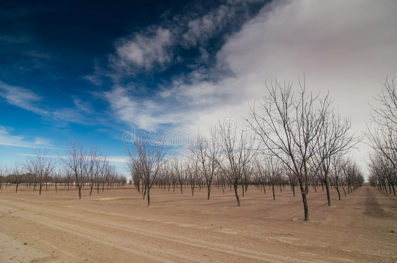 Download Árboles en invierno foto de archivo. Imagen de blanco - 44852792