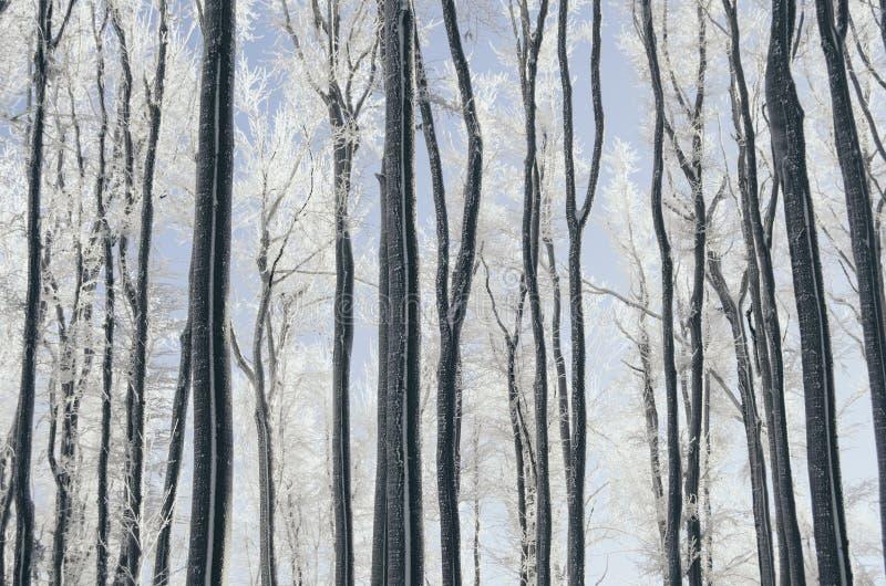 Árboles en invierno por la mañana imágenes de archivo libres de regalías