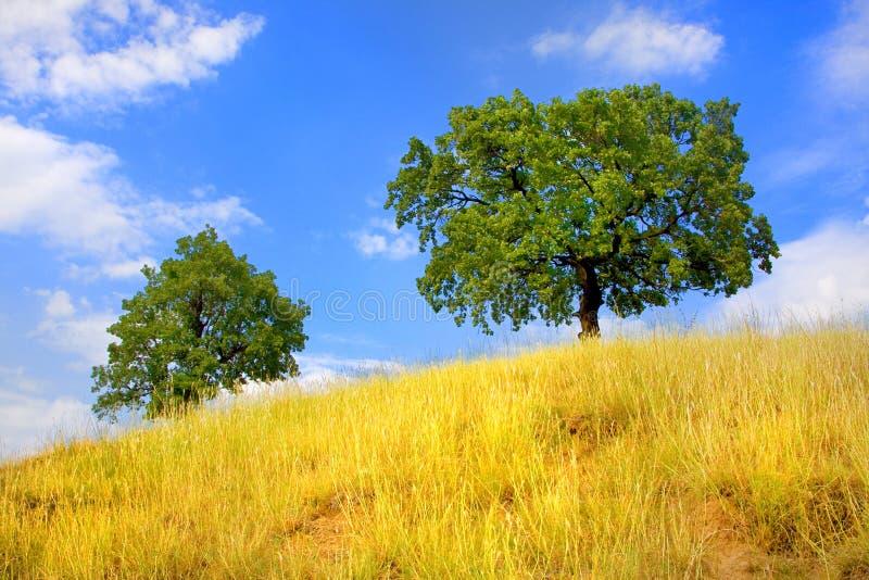 Árboles en la colina en verano fotos de archivo