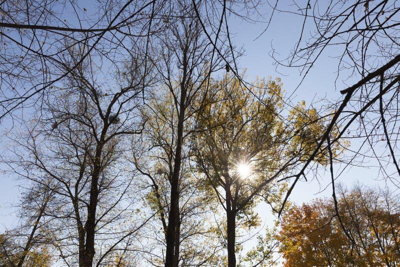 árboles en la estación del otoño imágenes de archivo libres de regalías