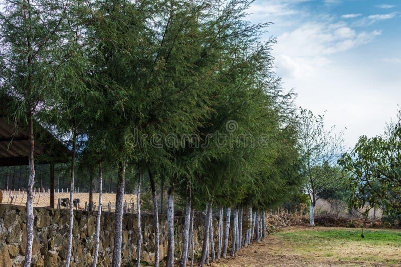 Árboles en la granja imagen de archivo libre de regalías