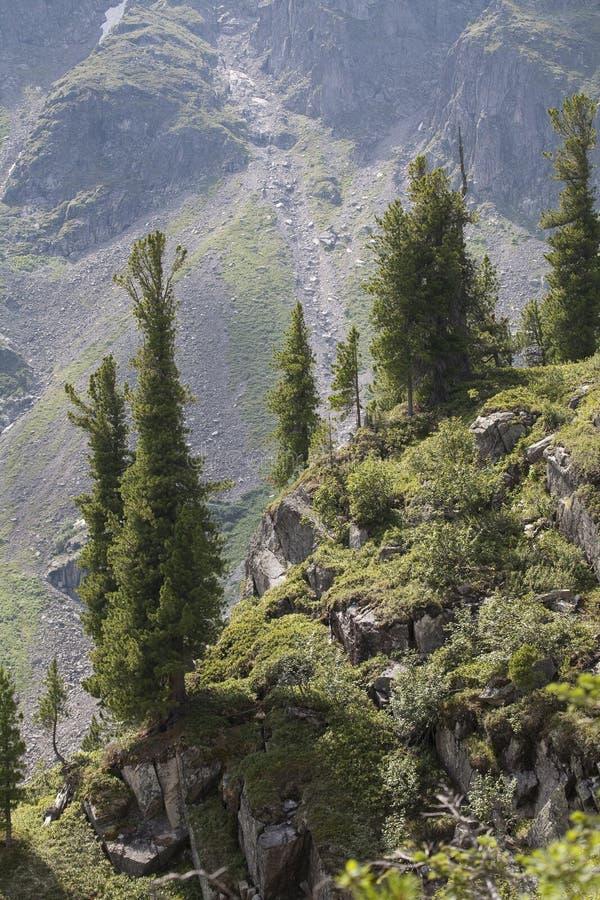 Árboles en la ladera contra el contexto del crum fotografía de archivo