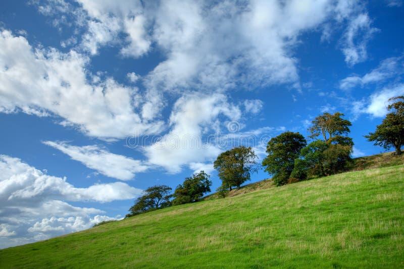 Árboles en la ladera de Cotswold imagenes de archivo