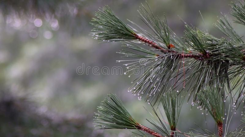Árboles en la lluvia Árboles bajo gotas de lluvia fotografía de archivo libre de regalías