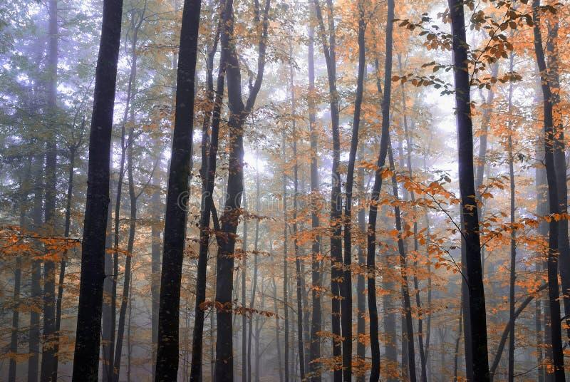 Árboles en la madera imagen de archivo