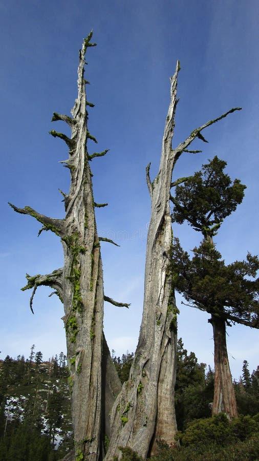 Árboles en la montaña fotos de archivo libres de regalías