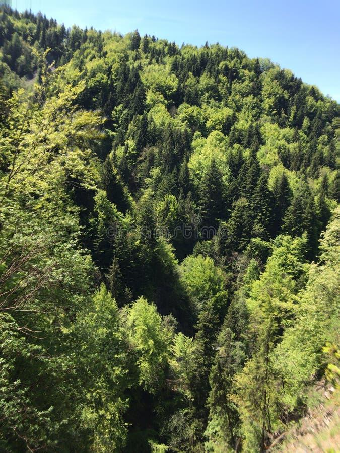 Árboles en la montaña imagenes de archivo