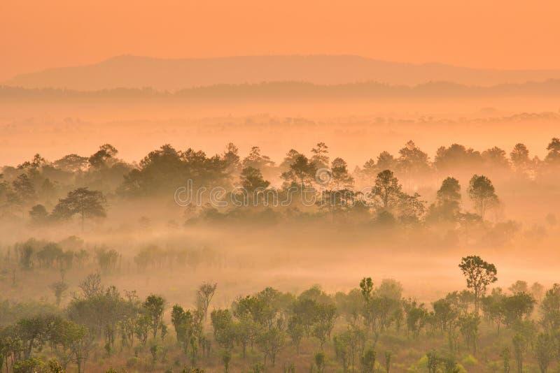 Árboles en la niebla con la montaña en el bakground imagenes de archivo
