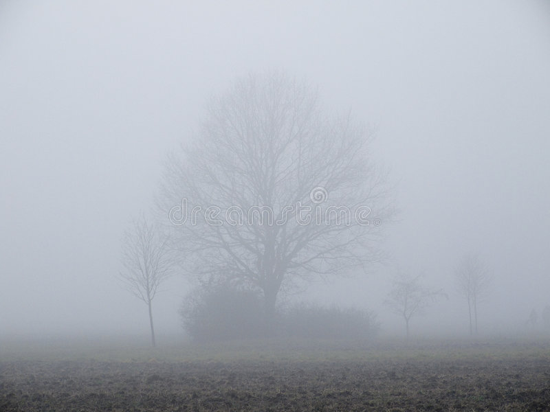 Árboles en la niebla del otoño fotos de archivo libres de regalías